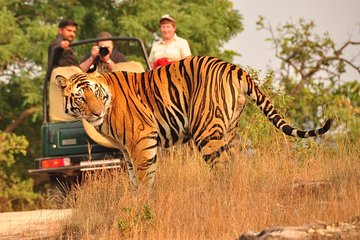 8 Days Taj, Tigers & Lakes : Delhi Agra Ranthambore Udaipur Jaipur Tour