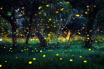 Glowing Fireflies & River Of Life Tour