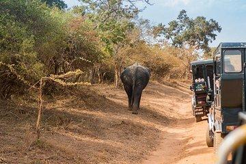 Yala nasjonalpark 1-dagers tur