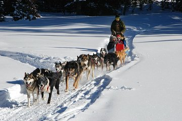 Ultimate Husky dog sledding experience in Latvia - Private tour from Riga