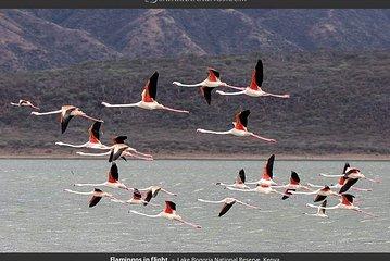 2 days,1 night Flamingo watching at Lake Bogoria and Lake Nakuru National Park