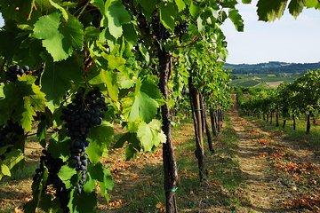 Degustazione di Pinot Nero: dal