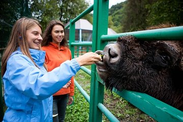 Eco-trail & Bison Breeding Centre in Moscow