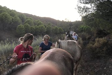 Walking with Horses