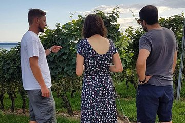Caminhada do vinho