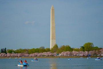 Cherry Festival 2020.Washington Dc Cherry Blossom Segway Tour
