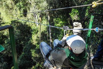Canopy City Tours