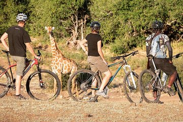 BIg Game Cycle Safari (MTB Mountain Bike) Botswana
