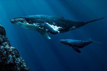 Nice Cote dAzur OCEANS: Digital and Immersive Odyssey