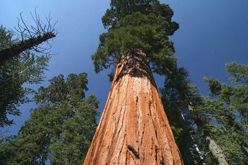 Sequoia National Park Adventure from Tulare