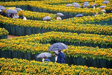 Van Gogh Museum: secret of the green sun