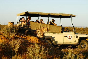 Inverdoorn Private Game Reserve Morning Safari