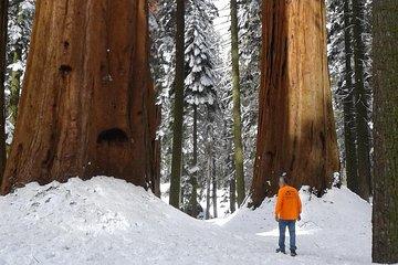 Sequoia National Park Snowshoe Adventure