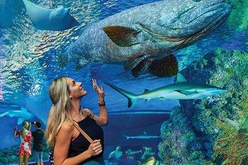 Cairns Aquarium Family Ticket