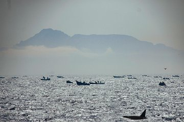 Excursion from Seville to Tarifa to see whales and dolphins