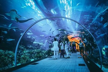 Skip the Line Largest Underwater Acrylic Dome at S.E.A. Aquarium Ticket only