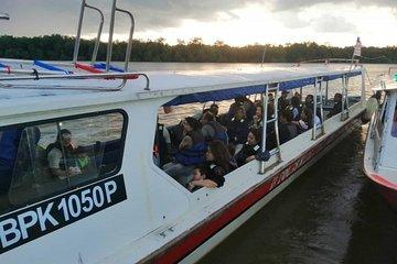 Twinkling Kuala Selangor Firefly Boat Tour from Kuala Lumpur