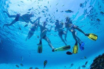 Excursion de plongée avec tuba...