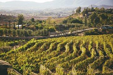 安塞尔葡萄酒之旅山谷之旅