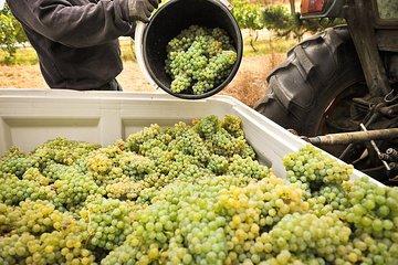 Adelaide Hills Wineries & Hahndorf