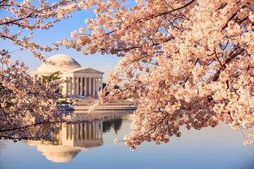 1-Day Washington D.C. Cherry Blossom Tour from Washington D.C.