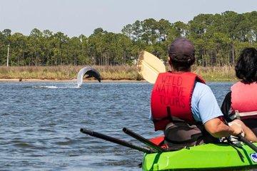 Dolphins & Wildlife Kayak Experience