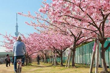 [AM9: 30 ~] East Tokyo E-Bike tour with sushi lunch (Asakusa, Akihabara, Sky Tree)