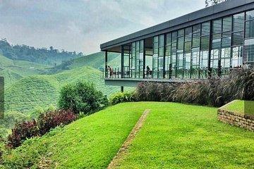 Big Red Strawberry Farm (Brinchang) - 2020 All You Need to Know Before You Go (with Photos) - Brinchang, Malaysia   Tripadvisor
