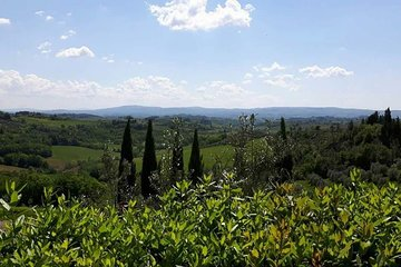 Wine tasting & lunch at Barbadoro winery close to Florence