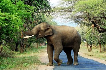 Chinnar Wild-Life Visiting Tour...