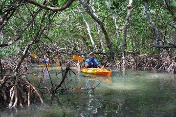 Dolphin, Manatee, Exotic, & Mangrove...