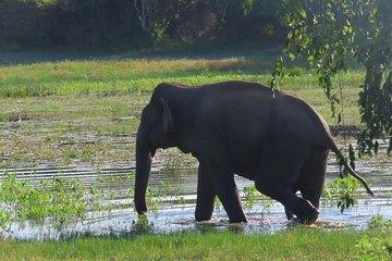 Viaje de safari al Parque Nacional...