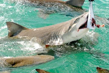 Shark and Wildlife Viewing Adventure in Key West