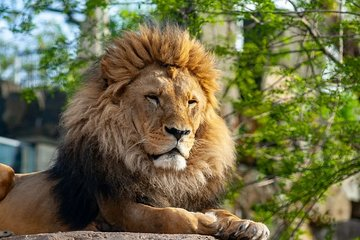 Krakow: Zoo Tour with Private Transport and Tickets