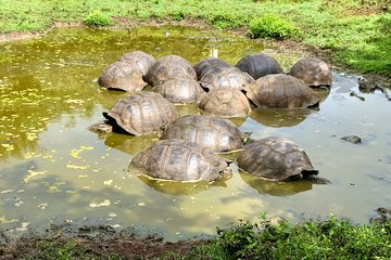 Join Online our Giant Tortoise Tour with an Expert in the Galapagos