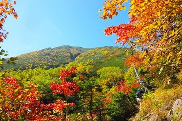 [Virtual Tour] Viewing Breathtakingly Beautiful Autumn Leaves in Japan