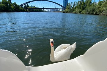 Frankfurt Explore Bird & Marine Wildlife Small Group Boat Tour in English