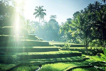 Ubud Traditional Village Sightseeing Tour
