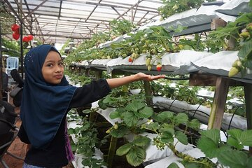 ~ Special Cameron Highlands ~ Day Tour;Solo;Couple;Group