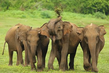 Udawalawe National Park Safari from Tangalle