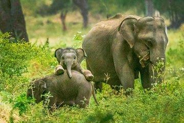 Yala National Park Safari from Tangalle