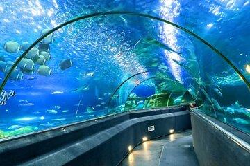 National Oceanographic Museum of Vietnam Nha Trang Tickets & Tours - Book  Now