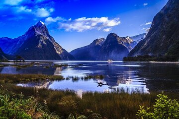 Premium Milford Sound Bus - Cruise - Fly Tour with Picnic Lunch from Queenstown