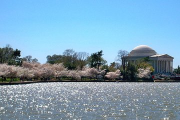 Tidal Basin: Stroll around the cherry blossoms and monuments on an audio tour