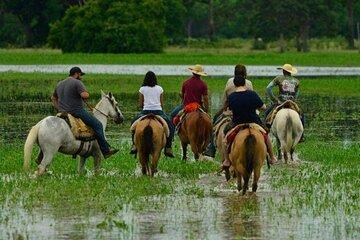 5-Days North Pantanal - Unearthing exotic treasures in the Pantanal wetlands