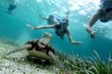 2-Tank Scuba Diving Ambergris Caye