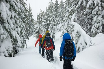 Private Snowshoeing Adventure from Badger Pass to Dewey Point