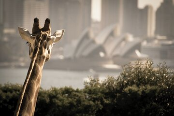 Sydney Harbour Hop On Hop Off Cruise with Taronga Zoo entry
