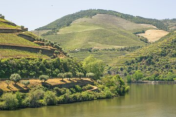 Full-Day Douro Valley Wine and Bike Tour from Porto