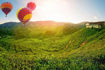 Private Full Day Cameron Highlands Nature Tour from Kuala Lumpur